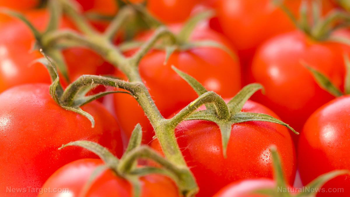 Are these 8 common mistakes creating a tomato timebomb in your garden?