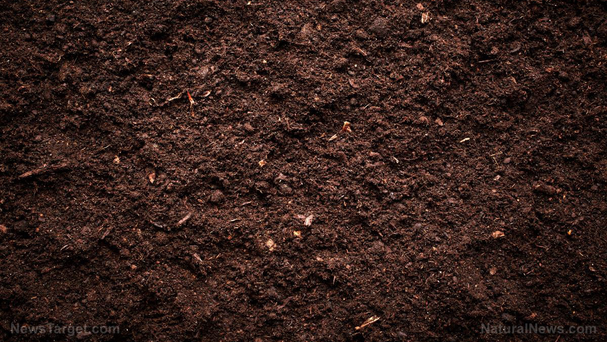 Organics news organics news organics information for Soil support